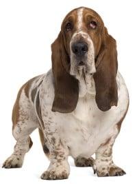 Engelse hondennamen