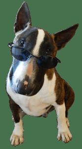 grappige hondennamen