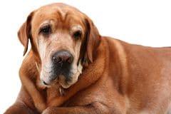 Hoe oud wordt een hond