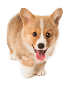 Puppy namen