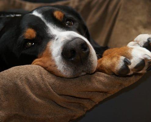 Zorg goed voor je hond